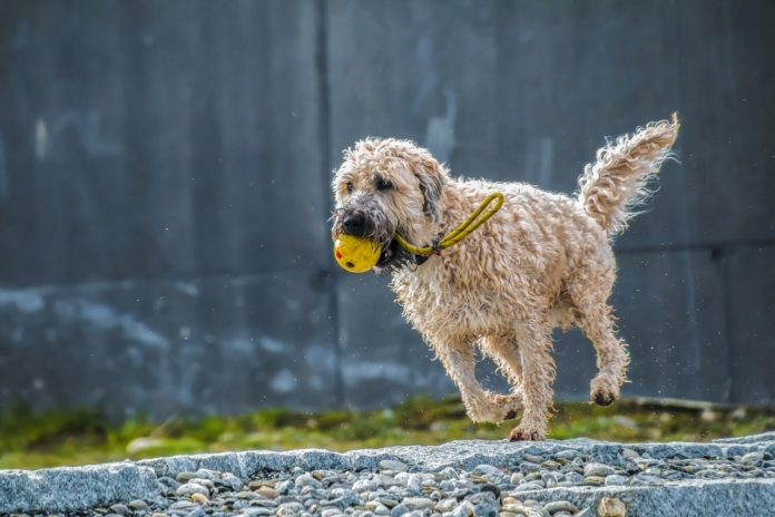 Best Dog Toys You Can Put Peanut Butter in