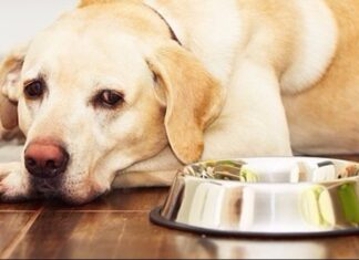Protein Allergy in Dogs: What Every New Dog Parent Must Know