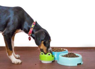 Cheap Dog Food