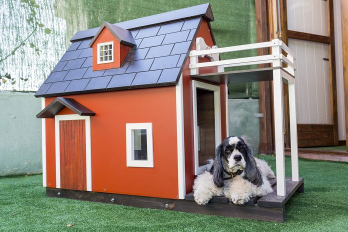 Best Dog House with Stairs and Balcony