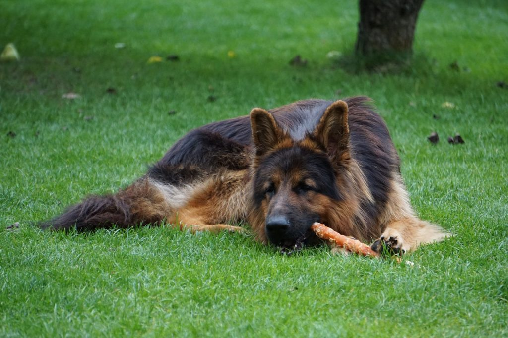 best smoked bones for dogs