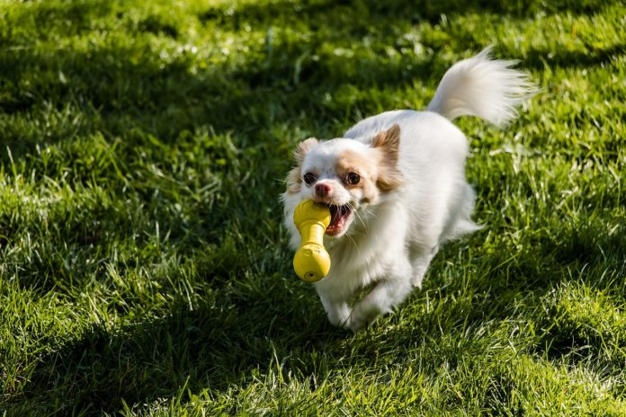 Freezable Teething Toys for Puppies