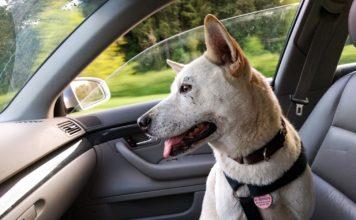 Dog console car seat