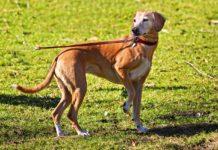 Zipline for Dogs