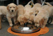 High Fiber Dog Foods for Small Breeds