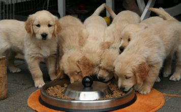 High Fiber Dog Foods for Small Breeds
