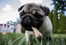 Dog Dental Chews for Sensitive Stomachs