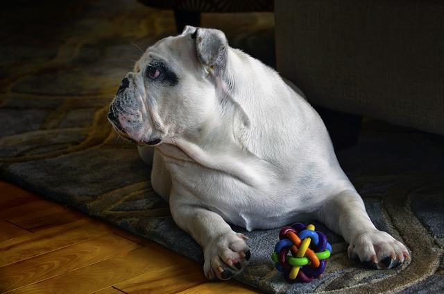 Best No Squeaker Dog Toys