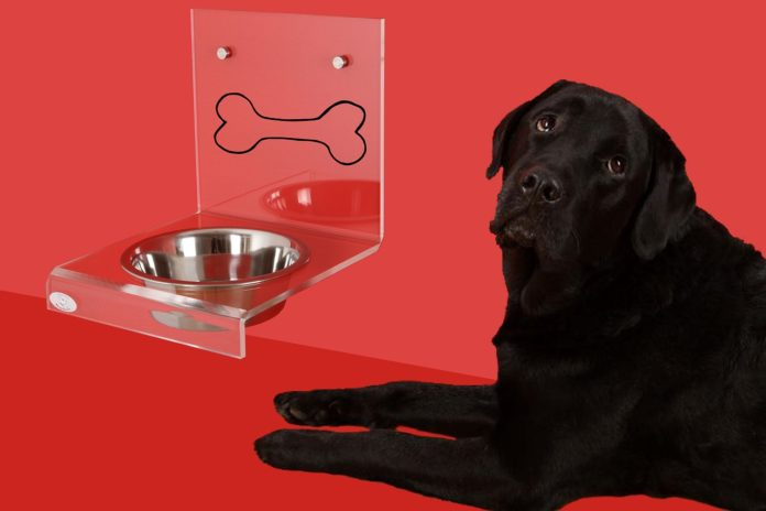 Best Elevated Dog Bowls for Great Danes