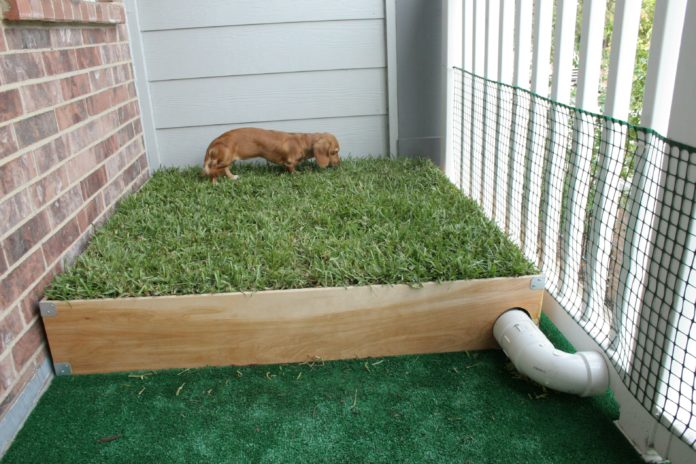 How to Build an Outdoor Dog Potty Area on Concrete