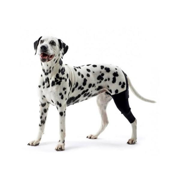 Best Luxating Patella Dog Supplements