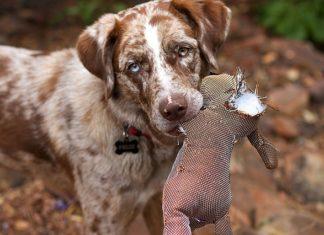Chew Guard Technology Dog Toys