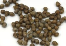 Can Dogs Eat Capers?