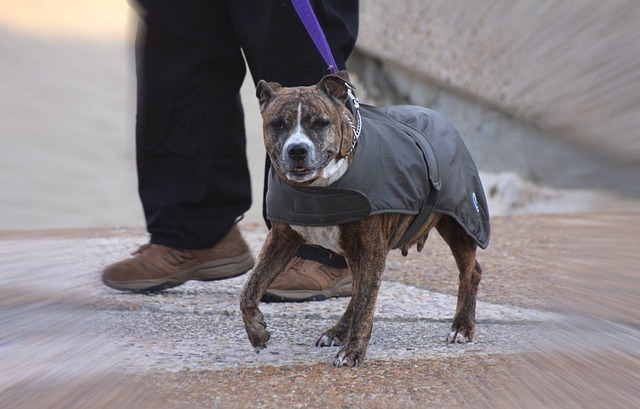 Dog Winter Coats with Harness Hole