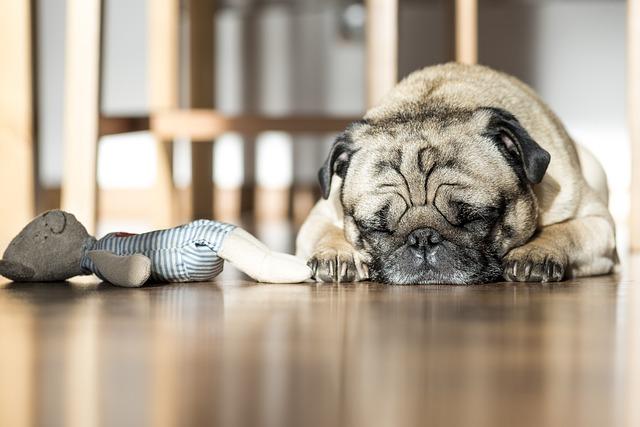 Heartbeat Dog Toys
