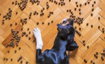 Dog Foods for Poop Eaters