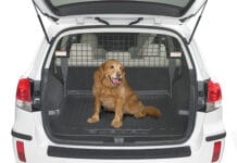 Dog Barriers for Subaru Outback