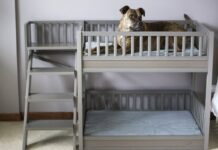 Bunk Beds for Dogs