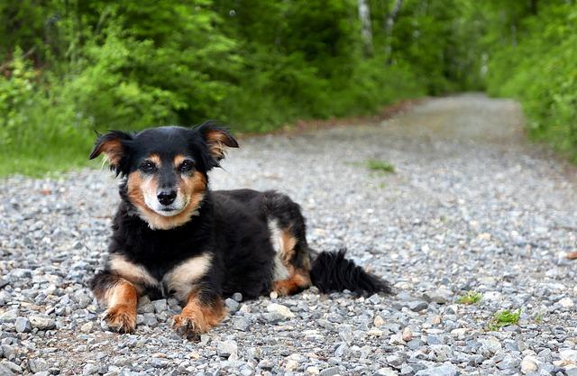 Best Stool Eating Deterrent for Dogs