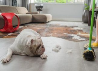 Home Remedies to Give Your Dog for Shedding