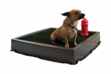 Best Potty Training Spray for Dogs