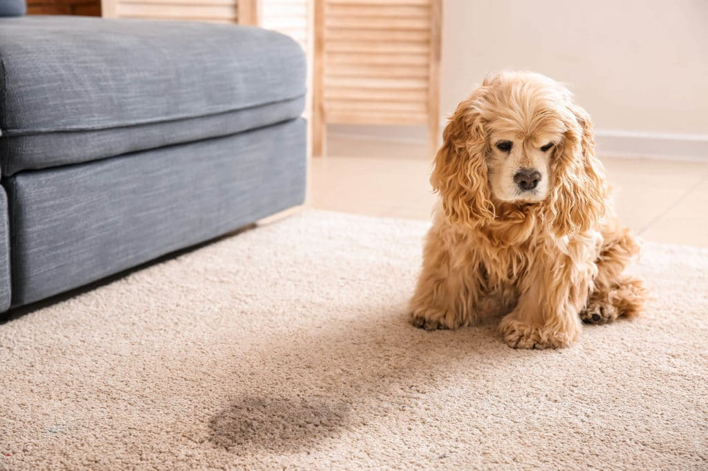 Enzyme Cleaners for Dog Urine