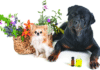 What Essential Oils are Toxic to Dogs?