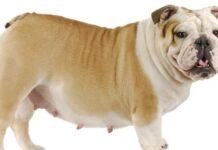 45 Days Pregnant Dog Symptoms