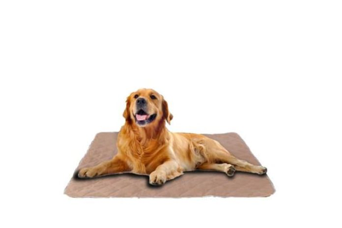 Best Washable Dog Pee Pads