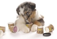 How Much Yogurt to Give Dog with Diarrhea