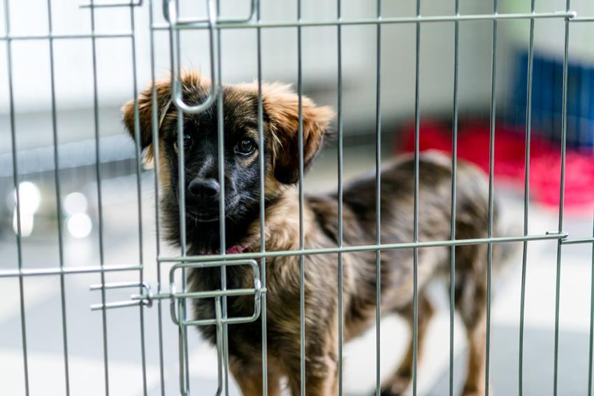 How Long Can You Leave A Puppy in a Crate?