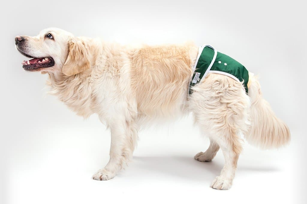 Best Dog Diapers for Males