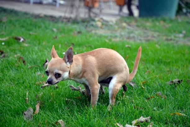 Dog Stool Softeners