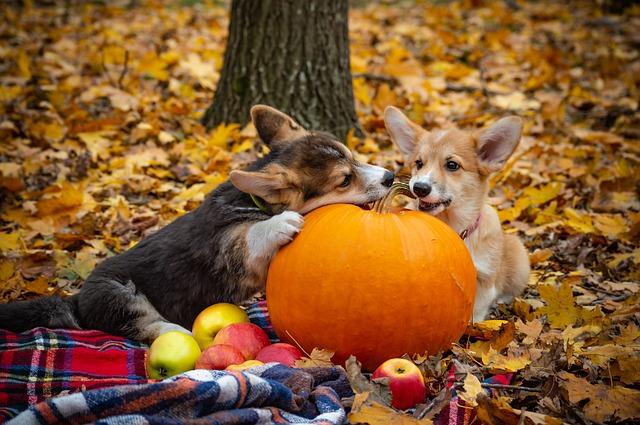 dog constipation pumpkin amount