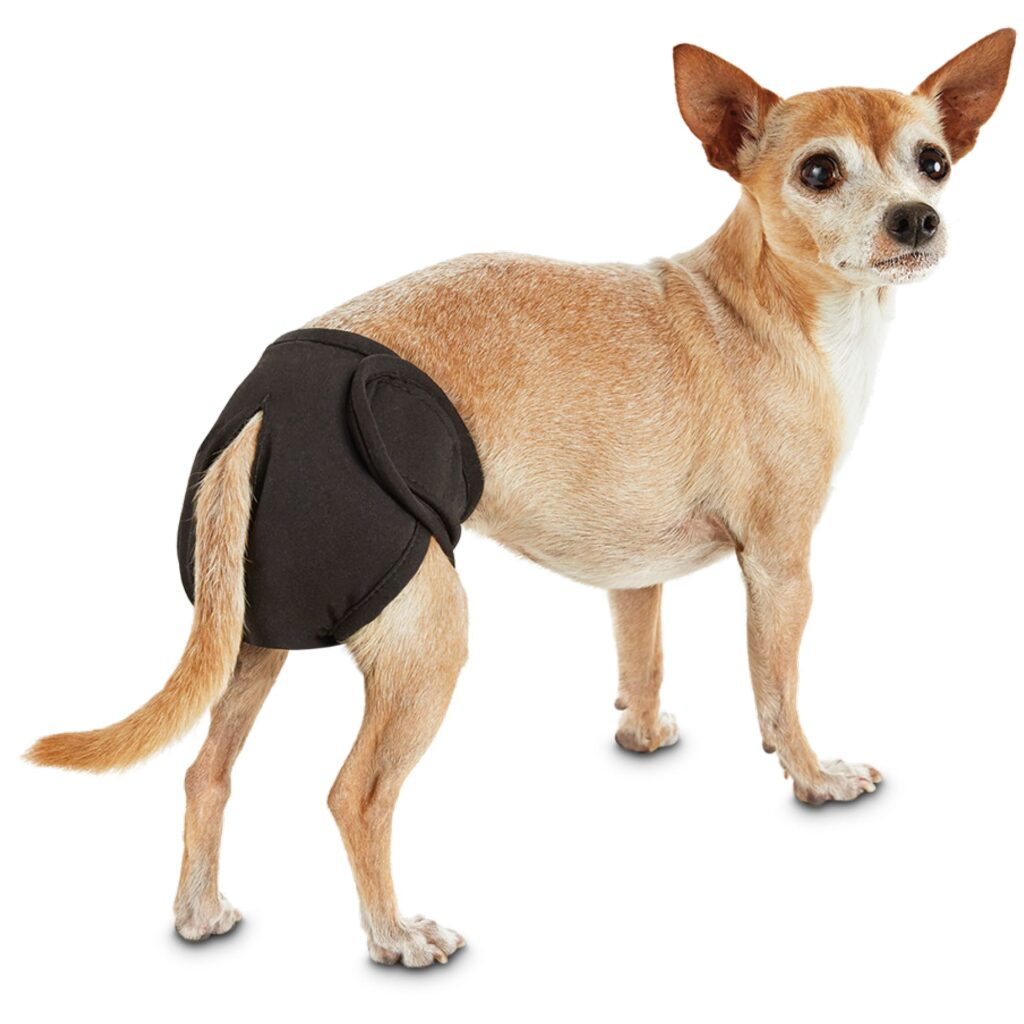 Best Dog Diapers for Periods