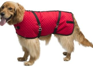 Horse blankets for dogs
