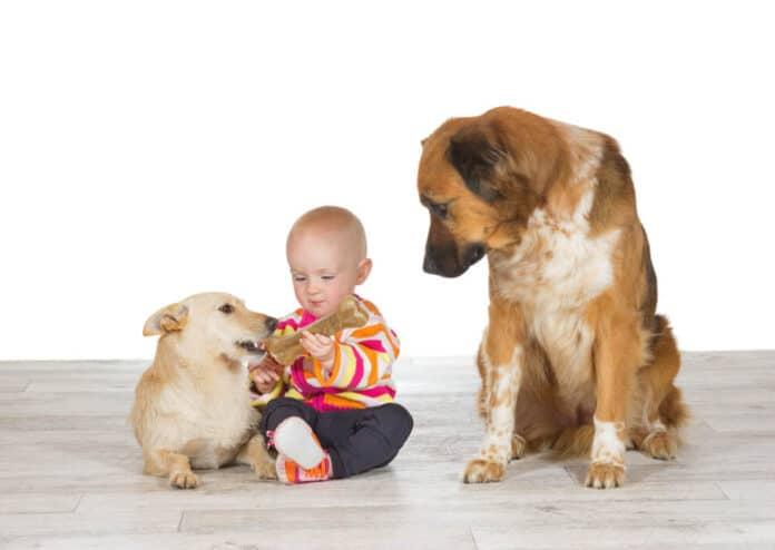 Most Jealous Dog Breeds