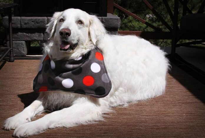 Best Dog Drool Bibs