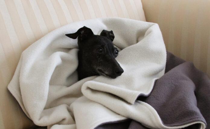 Best Heated Dog Blankets