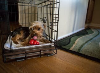 Best Crate Toys for Dogs
