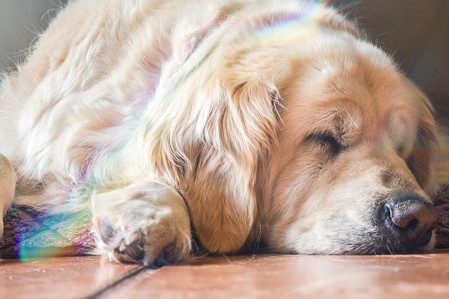Medium Sized Low Energy Dog Breeds