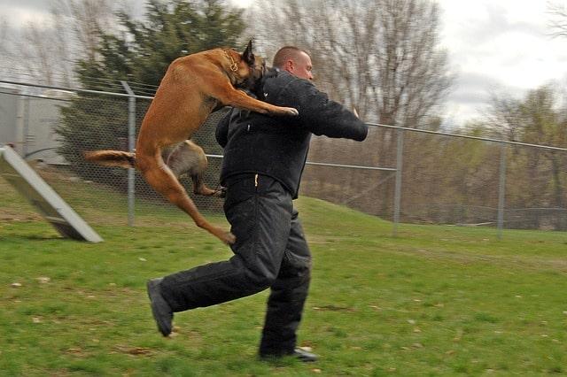 Attack Dog Breeds