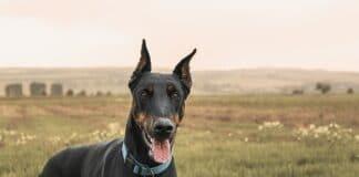 Dog Breeds with Long Necks