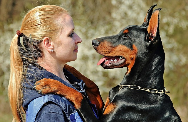 How Much Does It Cost to Crop a Dobermans Ears?