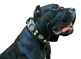 3 Inch Wide Dog Collars