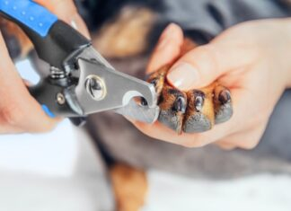Dog Nail Clippers with Light