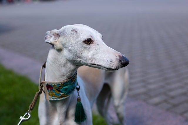 Best Agitation Dog Collars