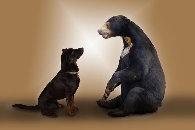 Best Bear Hunting Dog Breeds