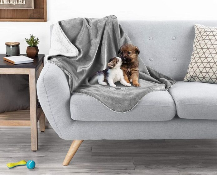 Best Dog Blankets for Couch