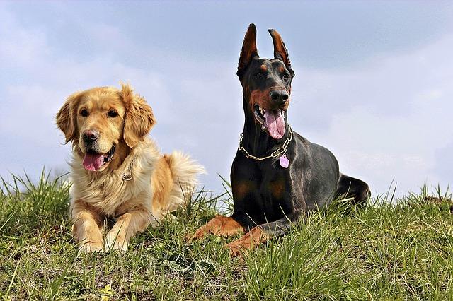 Southern Dog Breeds